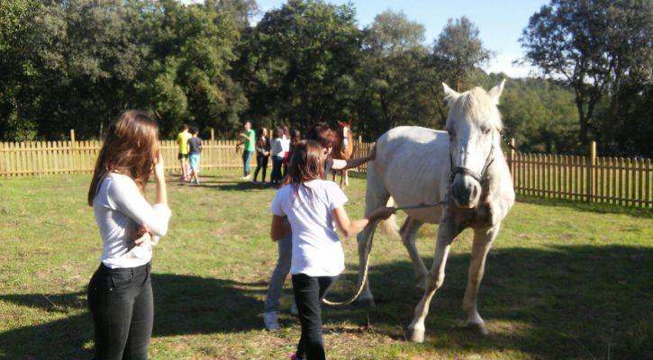 cavalls adolescents